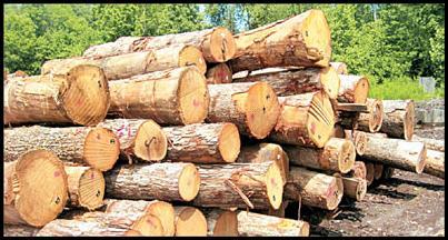 شناسایی سارقان چوبهای قیمتی در قیامدشت